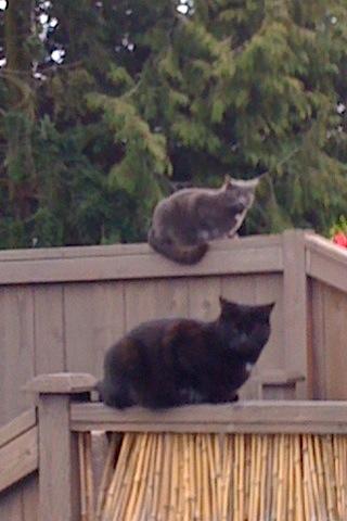 Feline Intruders